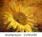 Photo of a sunflower on grunge background - stock photo