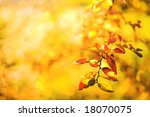 Yellow autumn background - stock photo