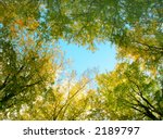 Golden and green beech tree tops - stock photo