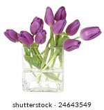 purple tulips in square glass vase isolated on white background - stock photo