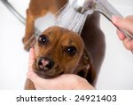 The dog be liked shower in the bath - stock photo