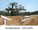 Oak tree in a field with a broken white picket fence - stock photo