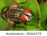 Close up look at Fly~ - stock photo