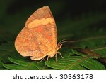 Day time active moth - stock photo