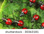 Red small bug moving together - stock photo