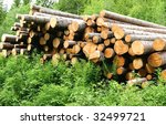 Timber - stock photo