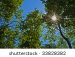 Sun shining through a canopy of trees - stock photo