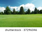 Summer landscape of grass and pine trees - stock photo