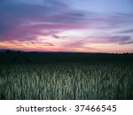 Beautiful scenic sky over a field of wheat - stock photo