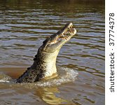 Jumping saltwater crocodile in the wild, Adelaide River, Northern Territory, Australia - stock photo