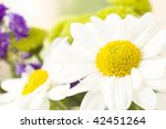a bunch of white and yellow daisies with a foliage background - stock photo