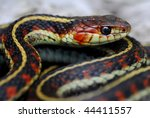 Red Valley Garter Snake - stock photo
