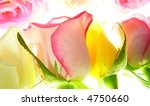 Close-up of delicate pink rose against blurred colourful background - stock photo
