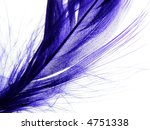 Close-up of fine purple feather against white background - stock photo