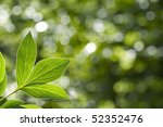 Beautiful green leaves on green and white and green  background - stock photo