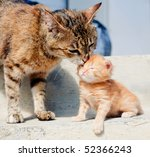 Cat is licking her red kitten - stock photo