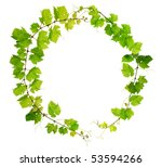 Fresh grapevine circle border on white background - stock photo