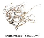 Dry Bush of Desert Tumble Weed on White Background - stock photo