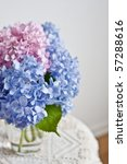hydrangea flowers - stock photo