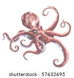 Octopus Painting - stock photo