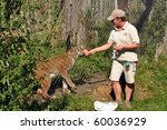 WENDOVER, CANADA - AUGUST 29:  An unidentified zookeeper feeds raw meat to a lynx as part of the zoo show August 29, 2010 at the Papanack Zoo in Wendover, Ontario. - stock photo