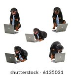 large dog protecting computer, safety concept - stock photo