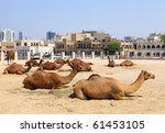 Camels resting in a compound in central Doha, Qatar, with the main souq, Souq Waqif in the background. Logos removed. - stock photo