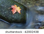 A fall colored maple leaf resting on a moss covered rock with water flowing around it. - stock photo