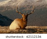 Bull Elk - stock photo