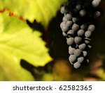 grapes from Douro - Portugal - stock photo
