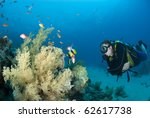 Male scuba diver observing marine life. Ras Ghozlani, Sharm el Sheikh, Red Sea, Egypt. - stock photo
