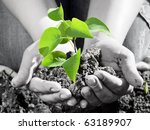 Green plant in the hand - stock photo