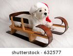 West Highland Terrier with Santa cap sitting on sled - stock photo