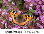 Small tortoiseshell on heather - stock photo