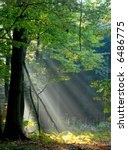 sunbeams pouring into the autumn forest creating a mystical ambiance - stock photo