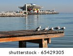 Sea gulls resting on a dock in a park with the Pier of St. Petersburg in the background. - stock photo