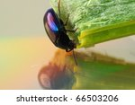 colorful wild insect - stock photo