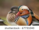 Pair of mandarin ducks - stock photo