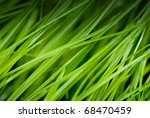 green grass close up with dew drops - stock photo