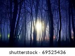 unknown lights and night in the forest - stock photo