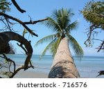 Palm n the beach in Costa Rica - stock photo