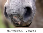 nose horse - stock photo