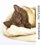 sleeping brown kitten wrapped in fur. - stock photo
