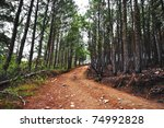 HDR photo of a dirt road in the middle of an old pine forest - stock photo