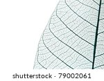 Leaf background. - stock photo