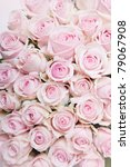 Close-Up of many pastel colored pink Roses - stock photo