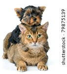 Cat and puppy in studio - stock photo