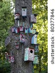 There is a tree with many nesting boxes for birds - stock photo