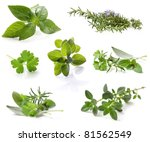 Collection of fresh herbs, isolated on white.  XXL file.  Please see individual images in my gallery. - stock photo