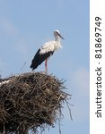 Stork in its nest over a clear blue backround - stock photo
